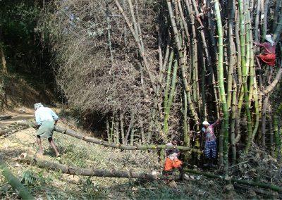 15_Bamboo trading